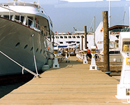 Marine Specialists of the Trasure Coast